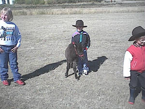 halterclass2003filly.jpg